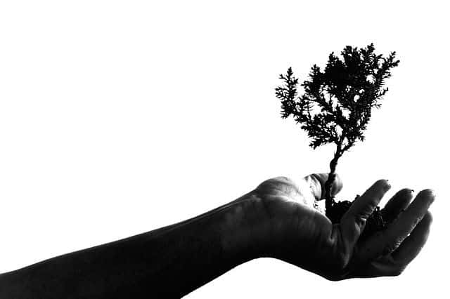 Is Your Firm Strategy Rooted In Reality? - Caldwell Consulting ...